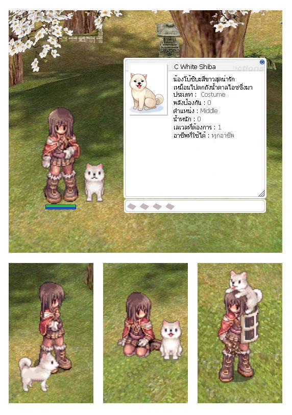 C_Kishu_Inu.jpg